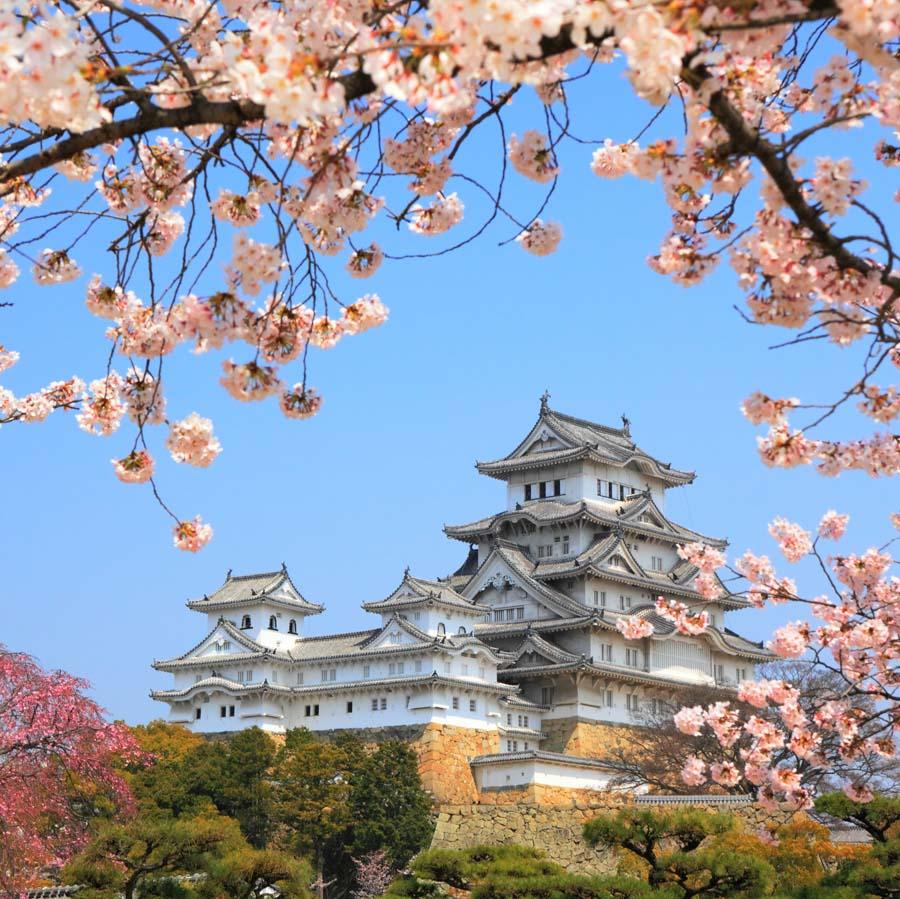 Island Trader Vacations Reviews Japanese Cherry Blossom Festivals
